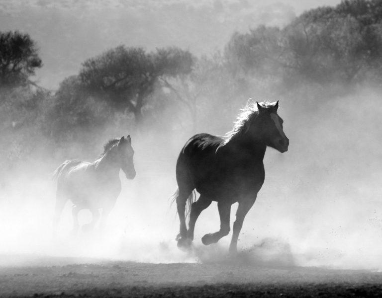 Waar paard en ruiter samenkomen afbeelding